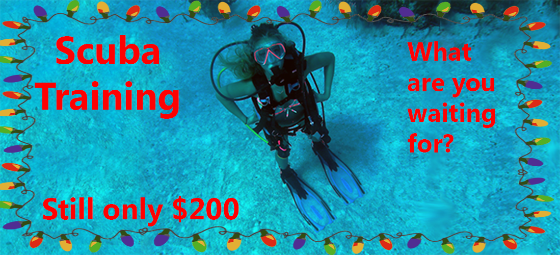 It's Time -- to Learn Scuba!